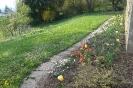 Frühlingserwachen im Leuchtspurbeet
