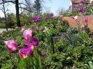 Farbenfroher Frühlingsstart