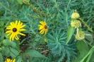 Blüten- und Blattformen